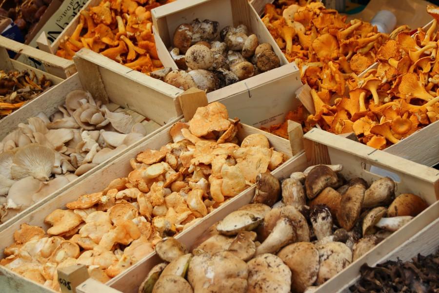 mushrooms-523629_1280